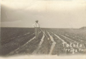 Potato Irrigation1